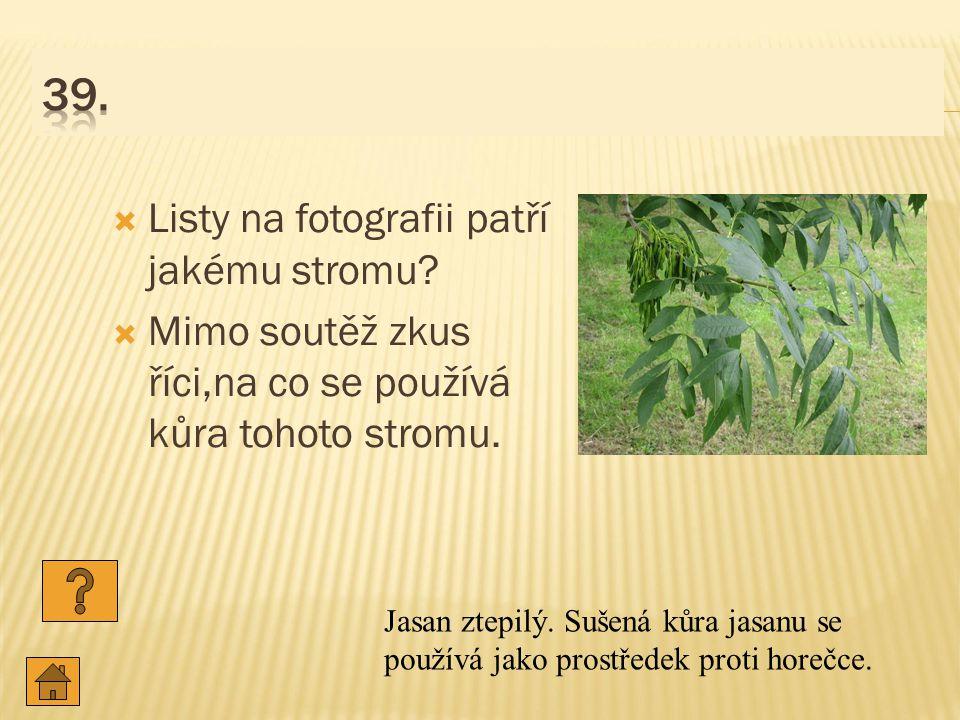 39. Listy na fotografii patří jakému stromu
