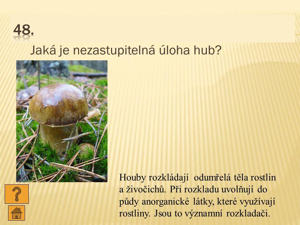 48. Jaká je nezastupitelná úloha hub
