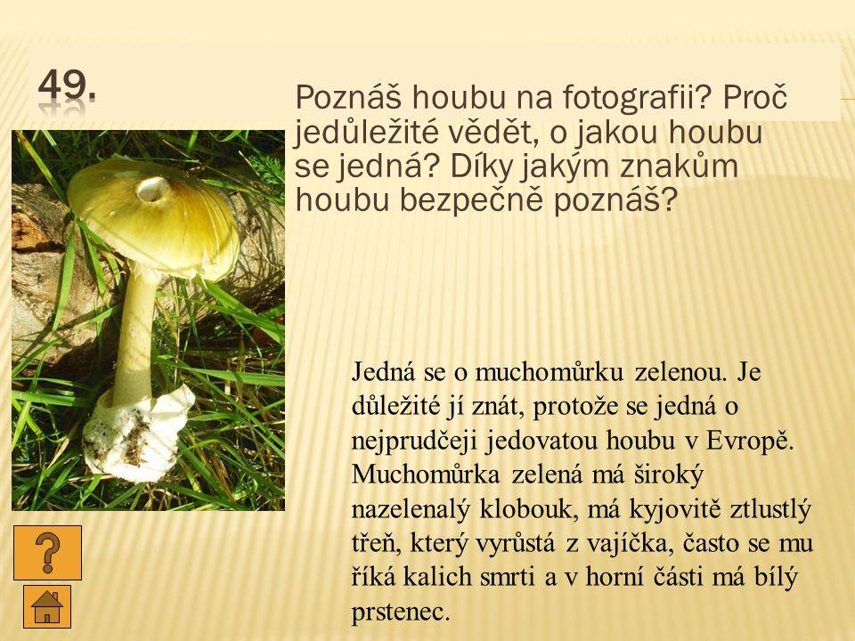 49. Poznáš houbu na fotografii Proč jedůležité vědět, o jakou houbu se jedná Díky jakým znakům houbu bezpečně poznáš
