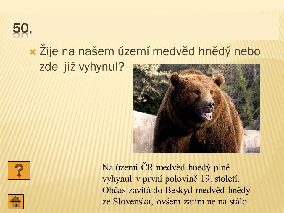 50. Žije na našem území medvěd hnědý nebo zde již vyhynul