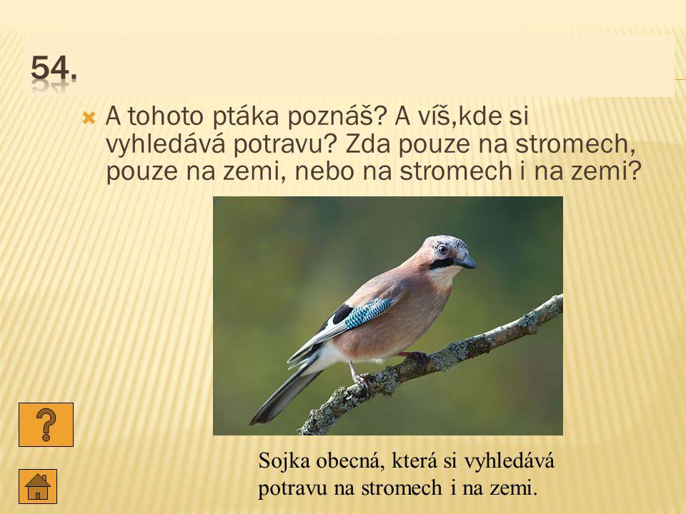 54. A tohoto ptáka poznáš A víš,kde si vyhledává potravu Zda pouze na stromech, pouze na zemi, nebo na stromech i na zemi