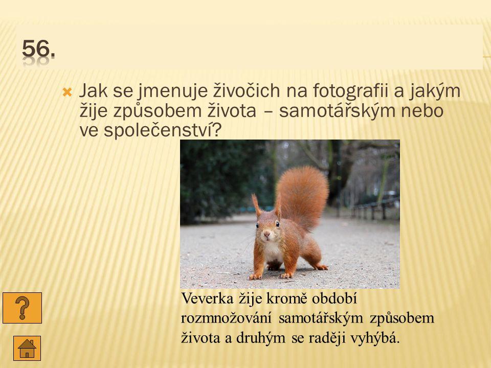 56. Jak se jmenuje živočich na fotografii a jakým žije způsobem života – samotářským nebo ve společenství