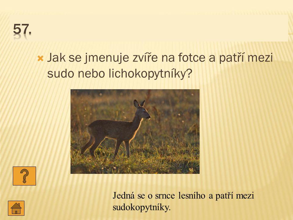 57. Jak se jmenuje zvíře na fotce a patří mezi sudo nebo lichokopytníky.