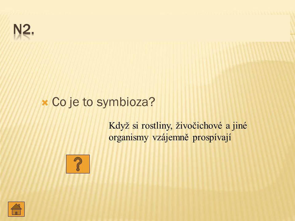 N2. Co je to symbioza Když si rostliny, živočichové a jiné organismy vzájemně prospívají