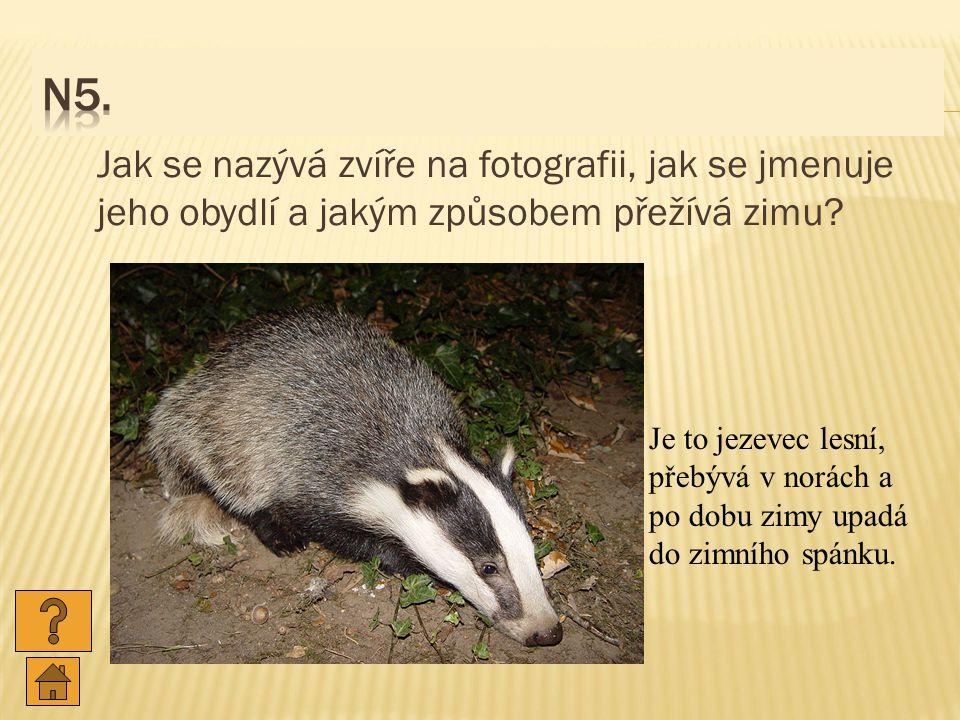 N5. Jak se nazývá zvíře na fotografii, jak se jmenuje jeho obydlí a jakým způsobem přežívá zimu