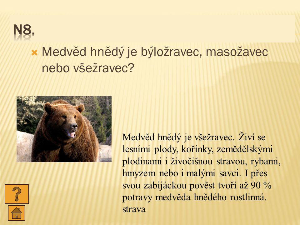 N8. Medvěd hnědý je býložravec, masožavec nebo všežravec