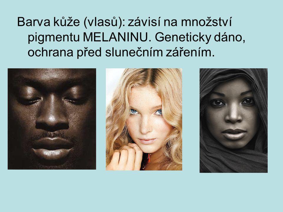 Barva kůže (vlasů): závisí na množství pigmentu MELANINU