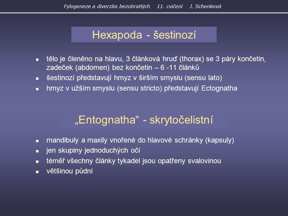 """Entognatha - skrytočelistní"