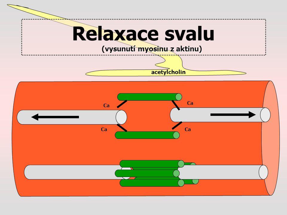 Relaxace svalu (vysunutí myosinu z aktinu)