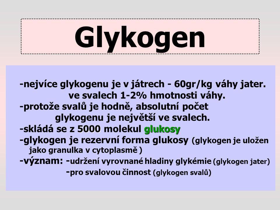 Glykogen -nejvíce glykogenu je v játrech - 60gr/kg váhy jater.