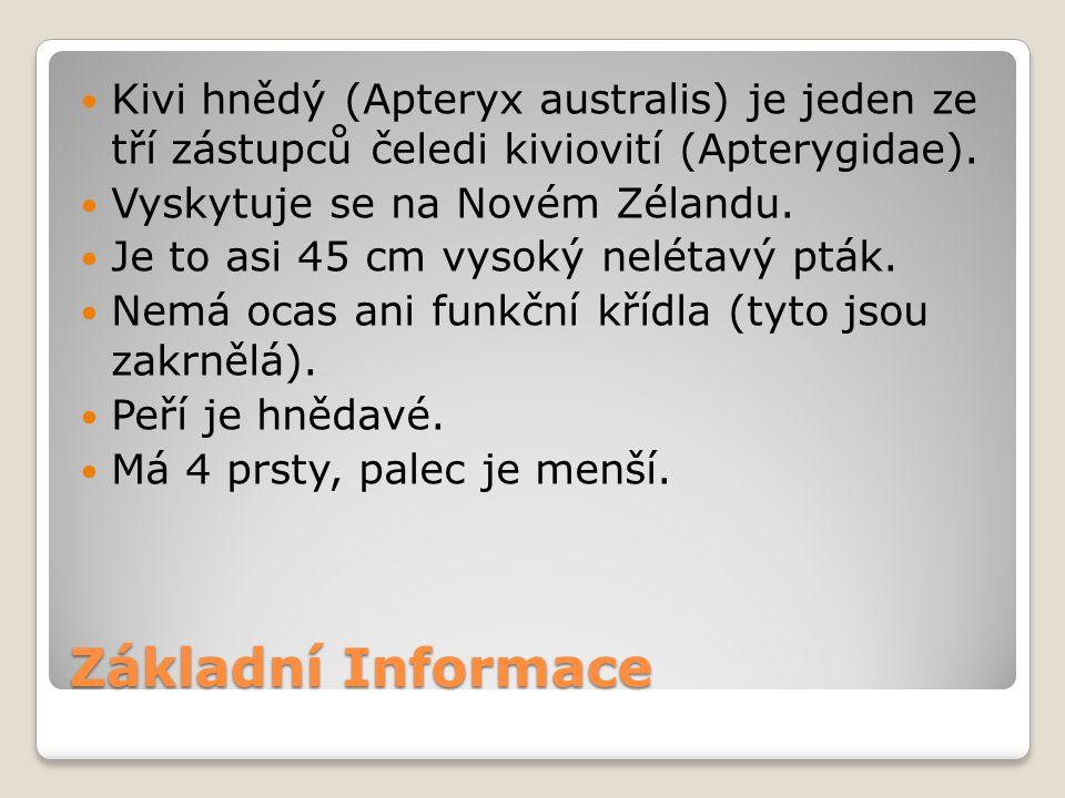 Kivi hnědý (Apteryx australis) je jeden ze tří zástupců čeledi kiviovití (Apterygidae).
