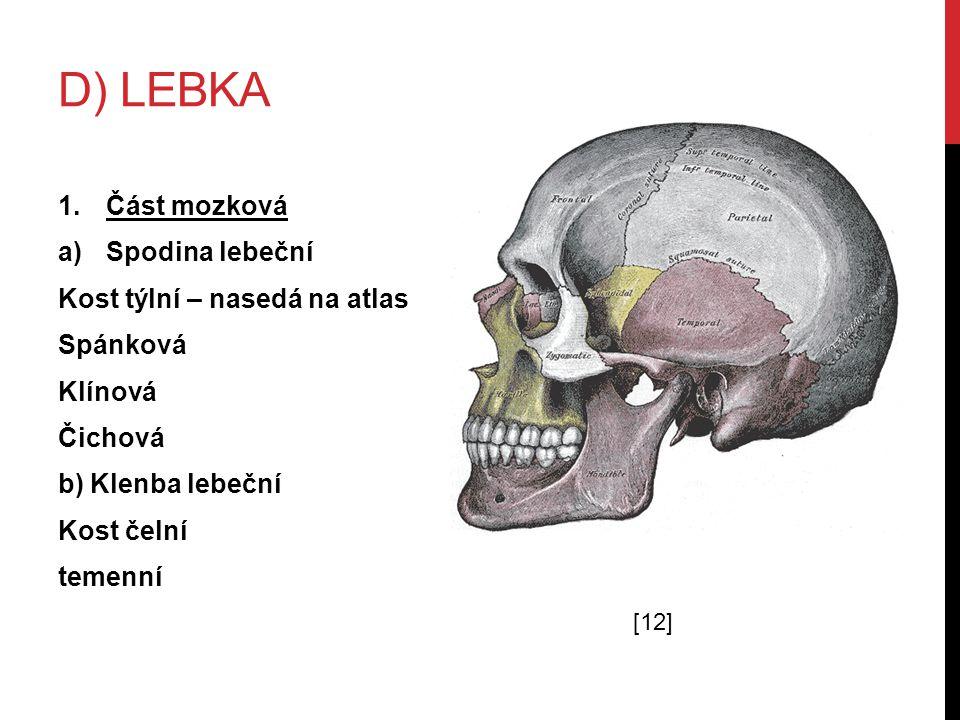 D) lebka Část mozková Spodina lebeční Kost týlní – nasedá na atlas