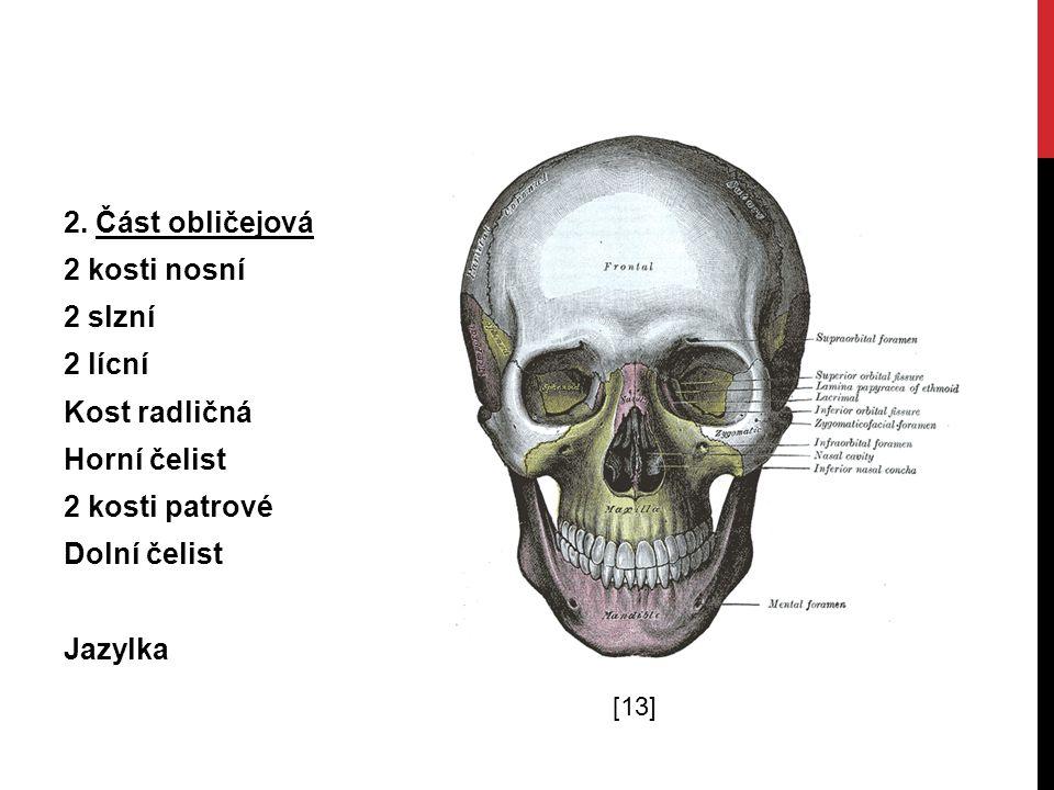2. Část obličejová 2 kosti nosní 2 slzní 2 lícní Kost radličná Horní čelist 2 kosti patrové Dolní čelist Jazylka