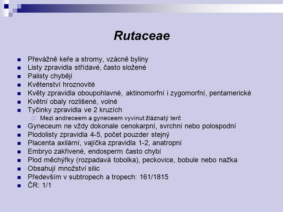 Rutaceae Převážně keře a stromy, vzácně byliny