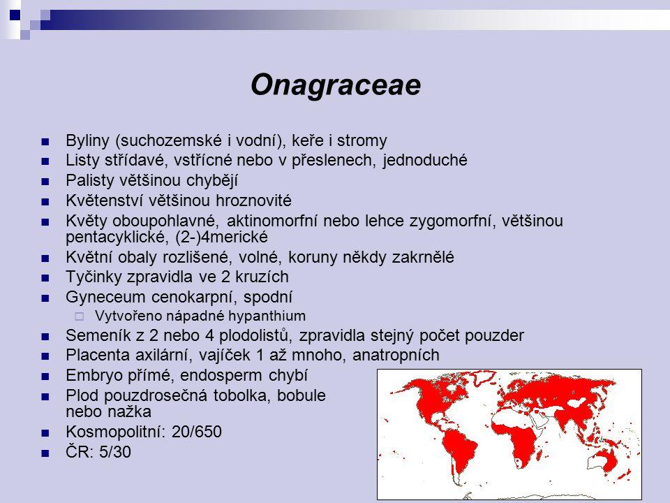 Onagraceae Byliny (suchozemské i vodní), keře i stromy