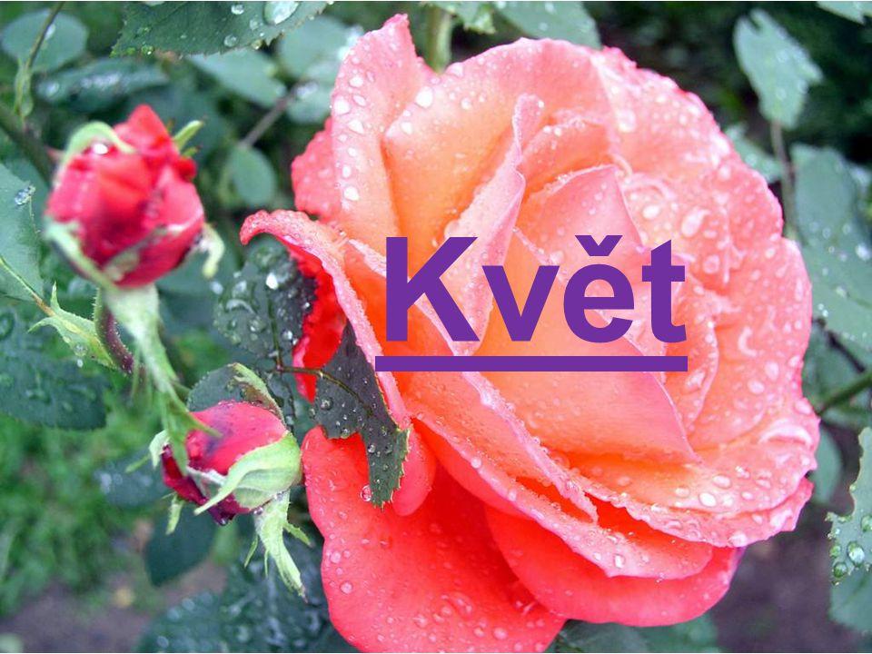 Květ http://www.mojetapety.cz/thumb.php katid=2&tapid=8&size=1