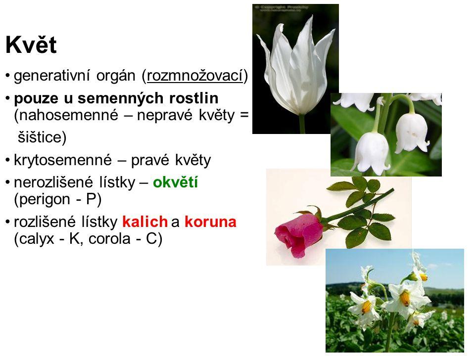 Květ generativní orgán (rozmnožovací)