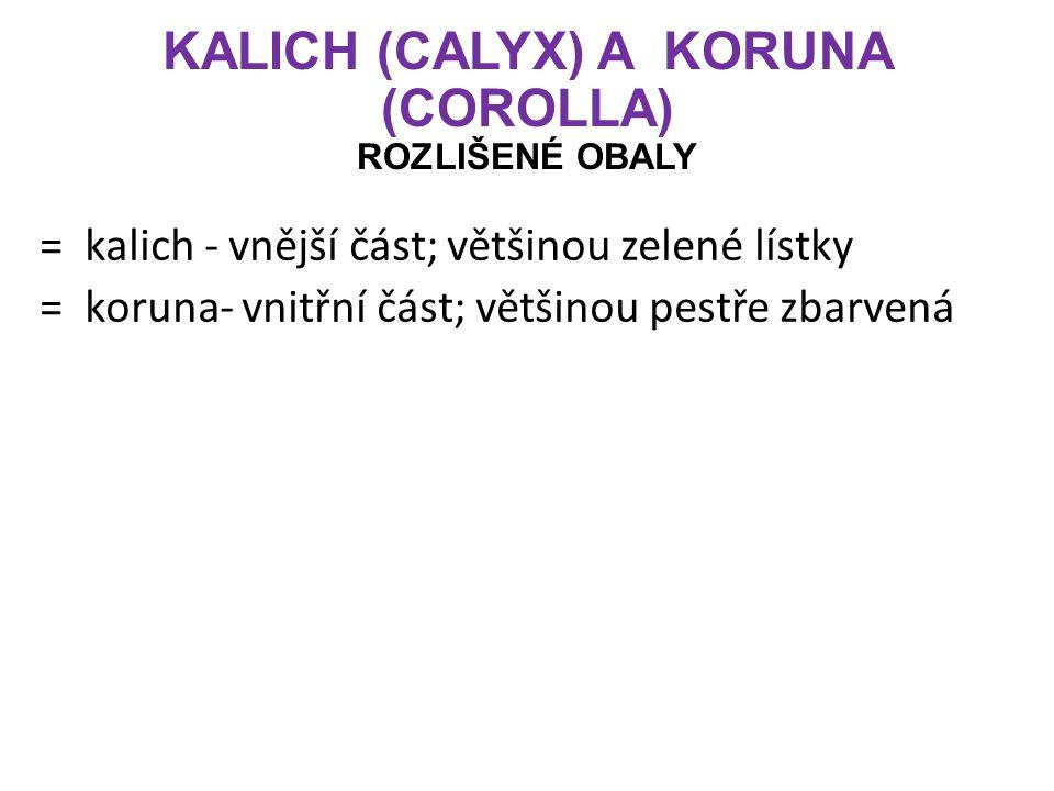 KALICH (CALYX) A KORUNA (COROLLA) ROZLIŠENÉ OBALY