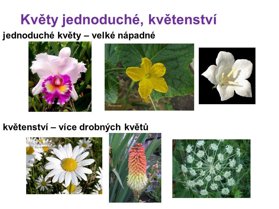 Květy jednoduché, květenství