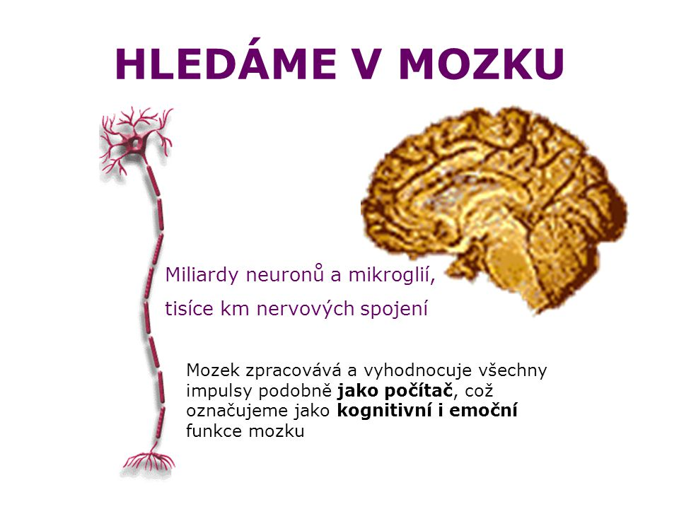 HLEDÁME V MOZKU Miliardy neuronů a mikroglií,