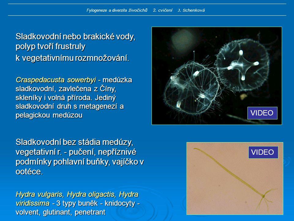 Fylogeneze a diverzita živočichů 2. cvičení J. Schenková