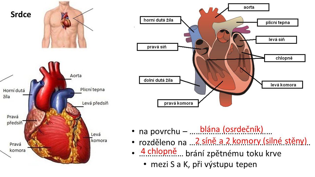 Srdce blána (osrdečník) na povrchu – ………………………………… rozděleno na ………………………………………………… ………………… brání zpětnému toku krve.