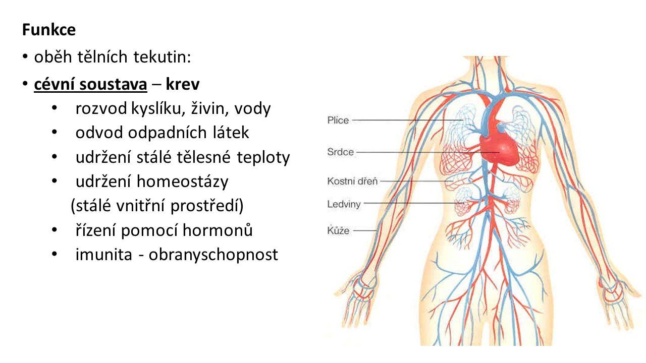 Funkce oběh tělních tekutin: cévní soustava – krev. rozvod kyslíku, živin, vody. odvod odpadních látek.