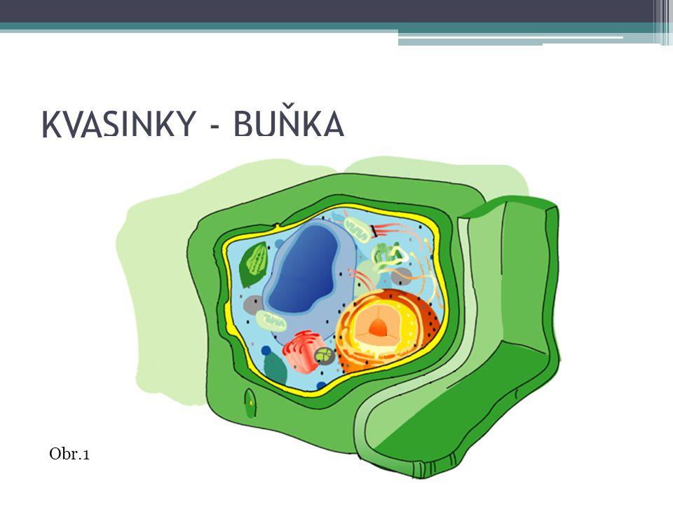 KVASINKY - BUŇKA Obr.1