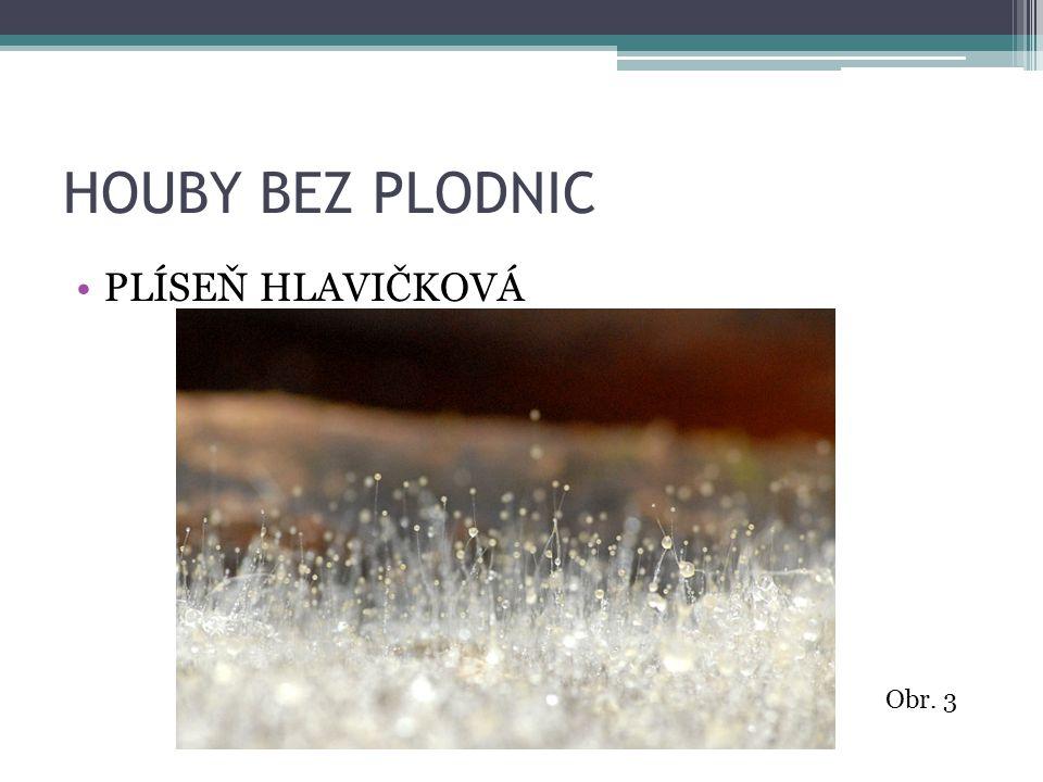 HOUBY BEZ PLODNIC PLÍSEŇ HLAVIČKOVÁ Obr. 3