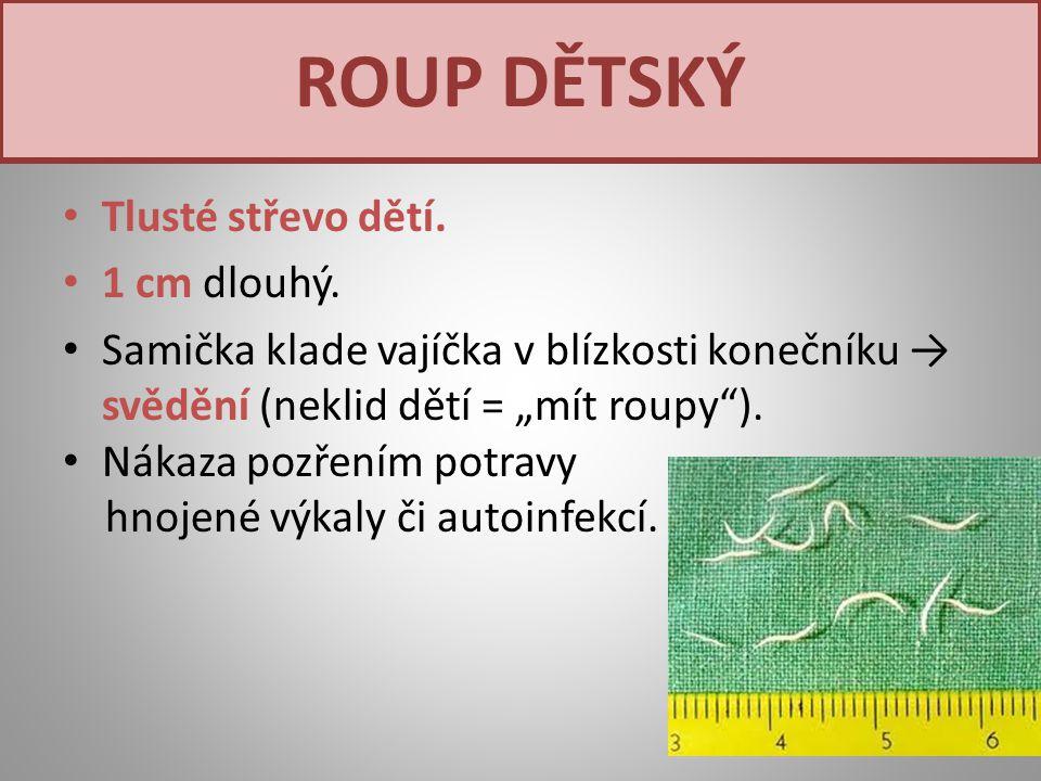 ROUP DĚTSKÝ Tlusté střevo dětí. 1 cm dlouhý.