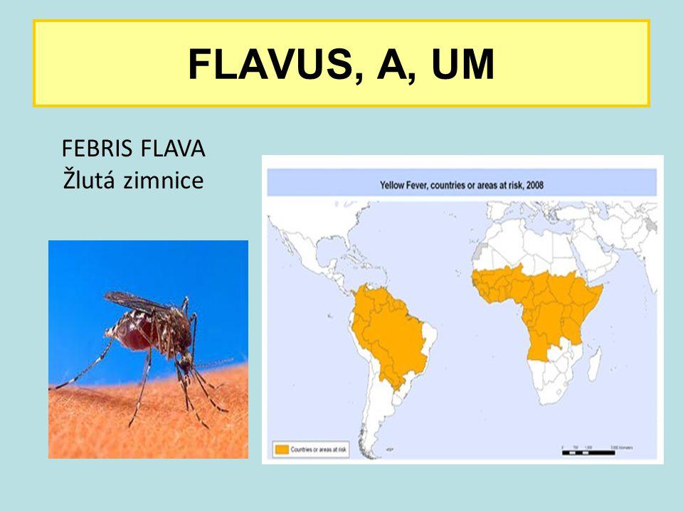 FLAVUS, A, UM FEBRIS FLAVA Žlutá zimnice 18