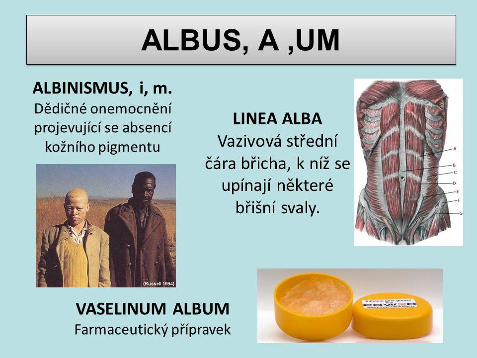 ALBUS, A ,UM ALBINISMUS, i, m. LINEA ALBA
