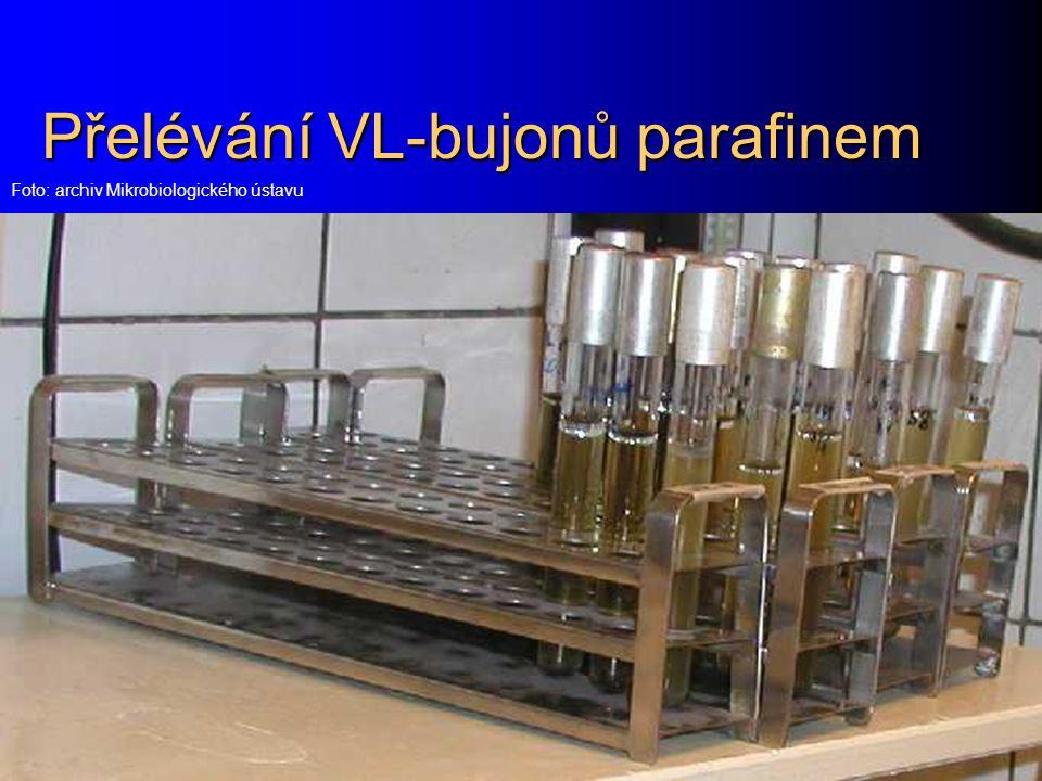 Přelévání VL-bujonů parafinem