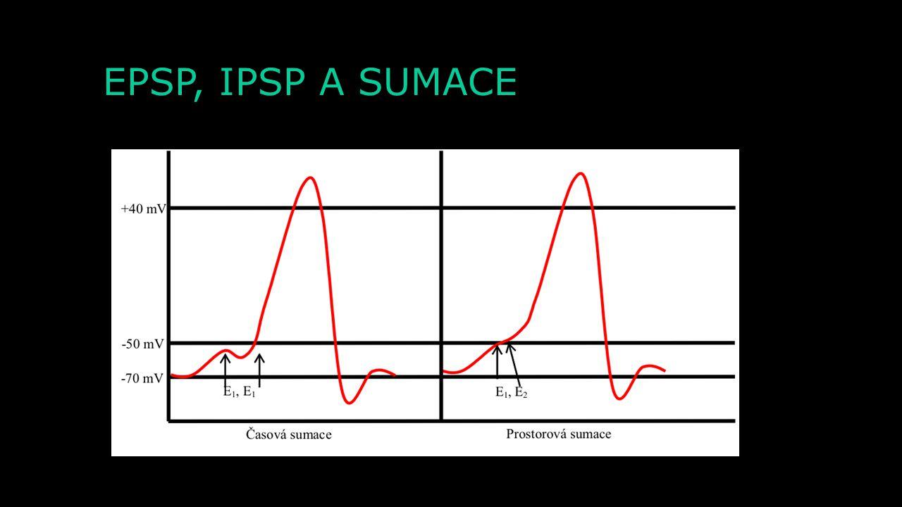 EPSP, IPSP A SUMACE