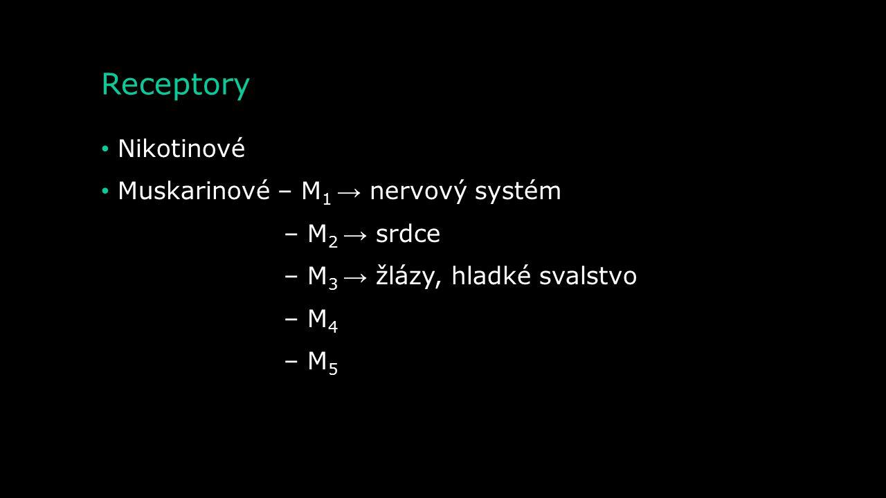 Receptory Nikotinové Muskarinové – M1 → nervový systém – M2 → srdce