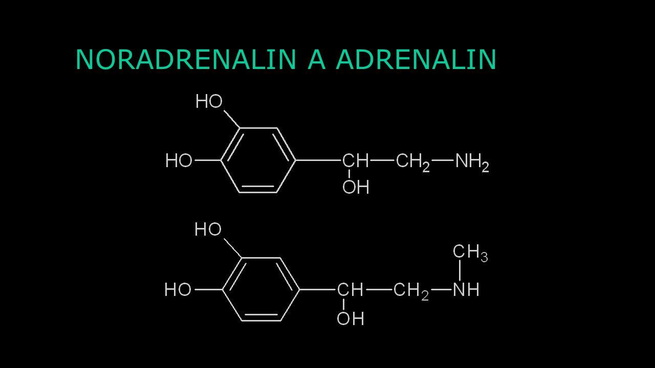 NORADRENALIN A ADRENALIN