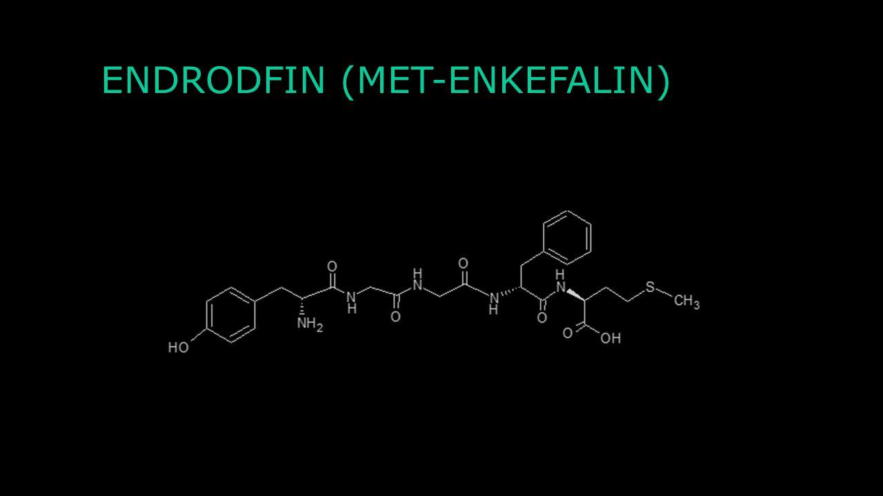 ENDRODFIN (MET-ENKEFALIN)