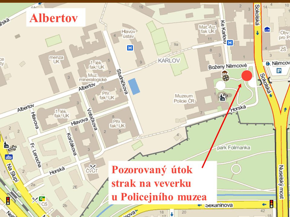 Albertov Pozorovaný útok strak na veverku u Policejního muzea