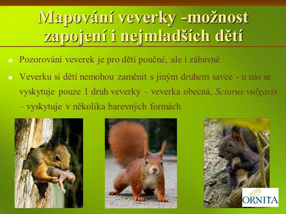 Mapování veverky -možnost zapojení i nejmladších dětí