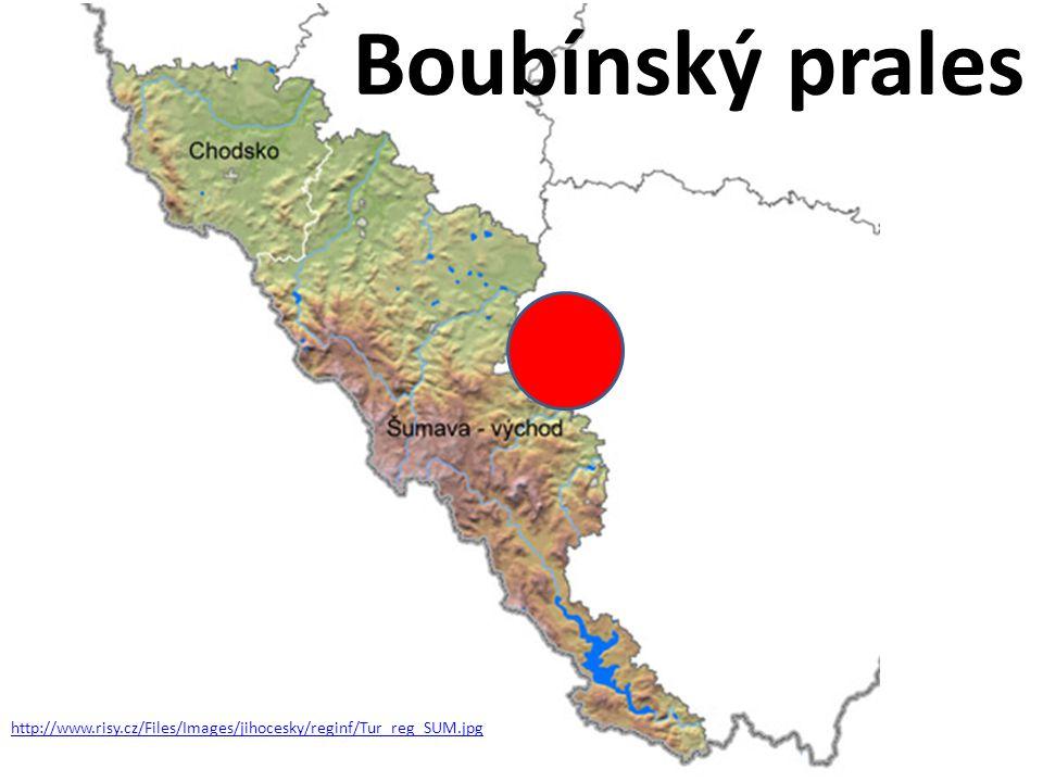 Boubínský prales http://www.risy.cz/Files/Images/jihocesky/reginf/Tur_reg_SUM.jpg