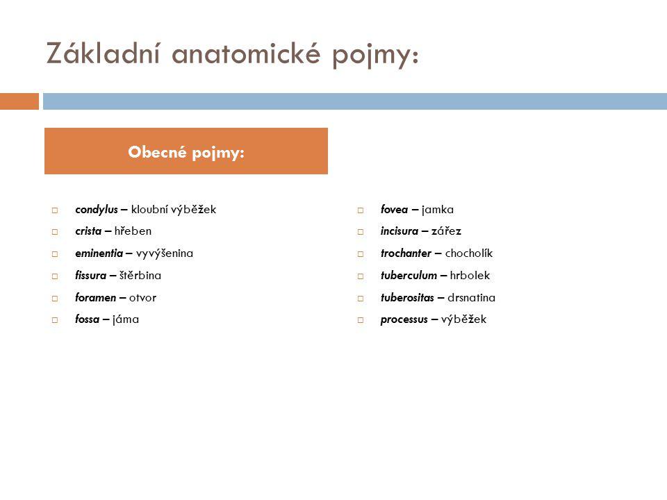 Základní anatomické pojmy: