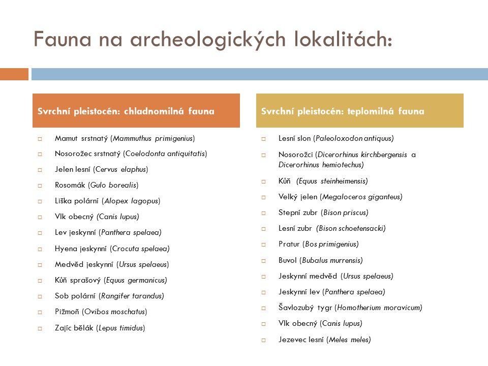 Fauna na archeologických lokalitách: