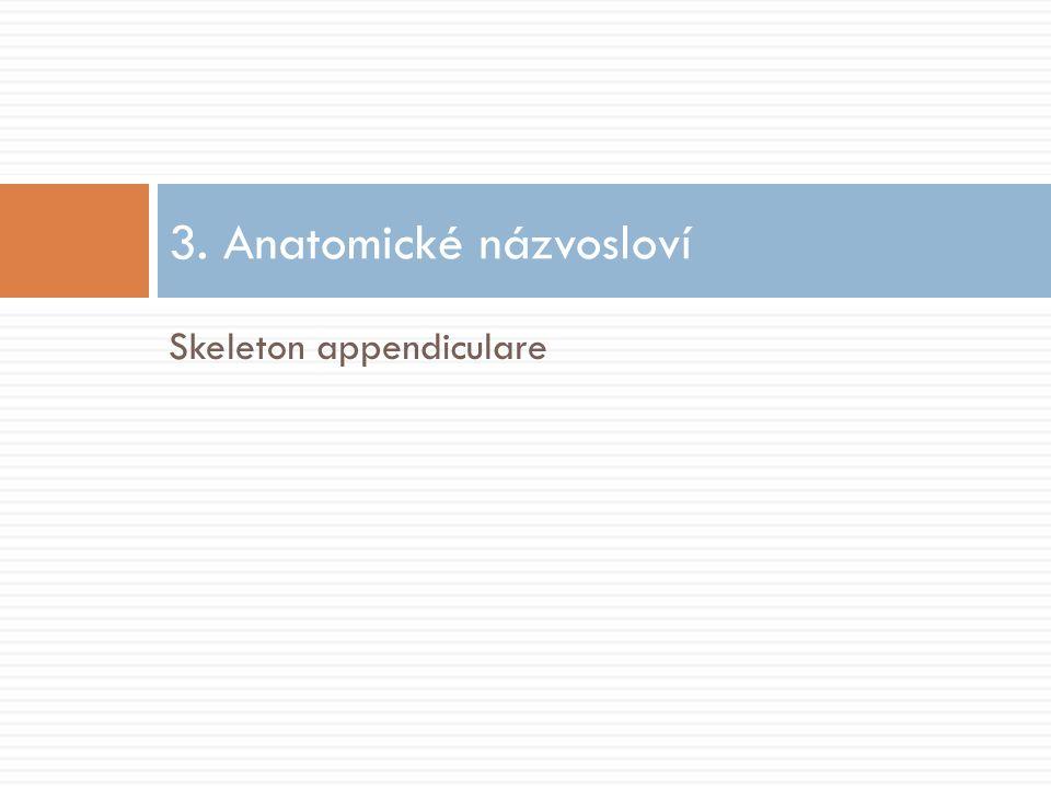 3. Anatomické názvosloví
