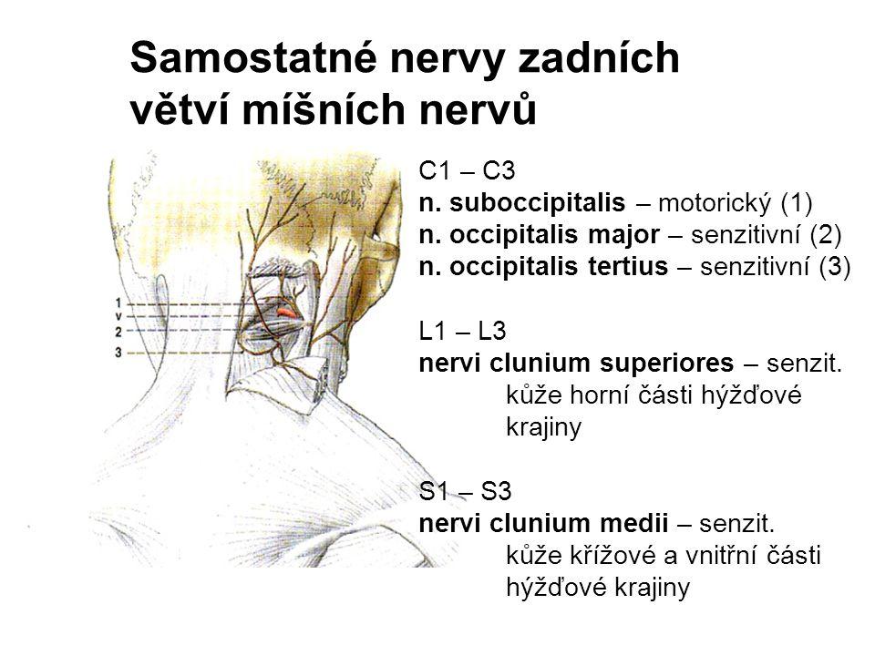 Samostatné nervy zadních větví míšních nervů