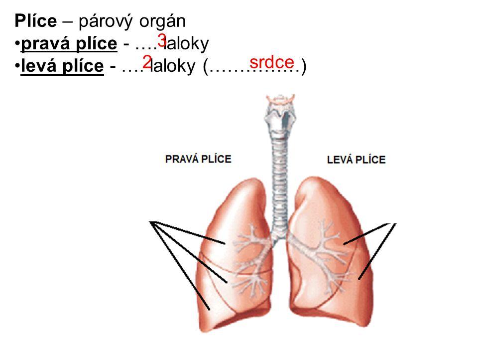 Plíce – párový orgán pravá plíce - …. laloky levá plíce - …. laloky (……………) 3 2 srdce
