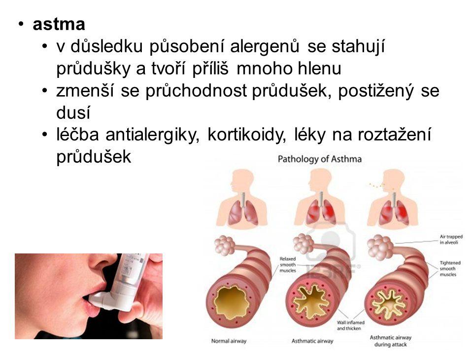 astma v důsledku působení alergenů se stahují průdušky a tvoří příliš mnoho hlenu. zmenší se průchodnost průdušek, postižený se dusí.