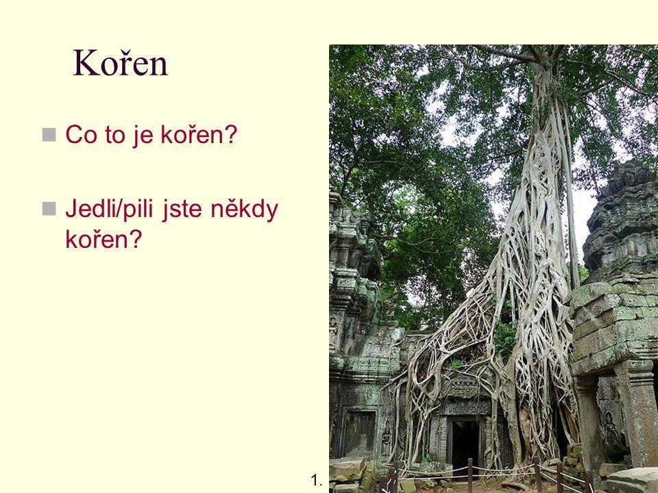 Kořen Co to je kořen Jedli/pili jste někdy kořen 1.