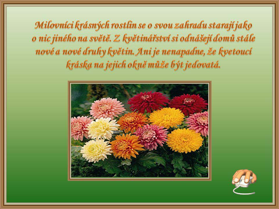Milovníci krásných rostlin se o svou zahradu starají jako