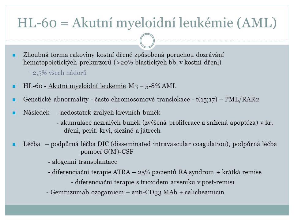 HL-60 = Akutní myeloidní leukémie (AML)