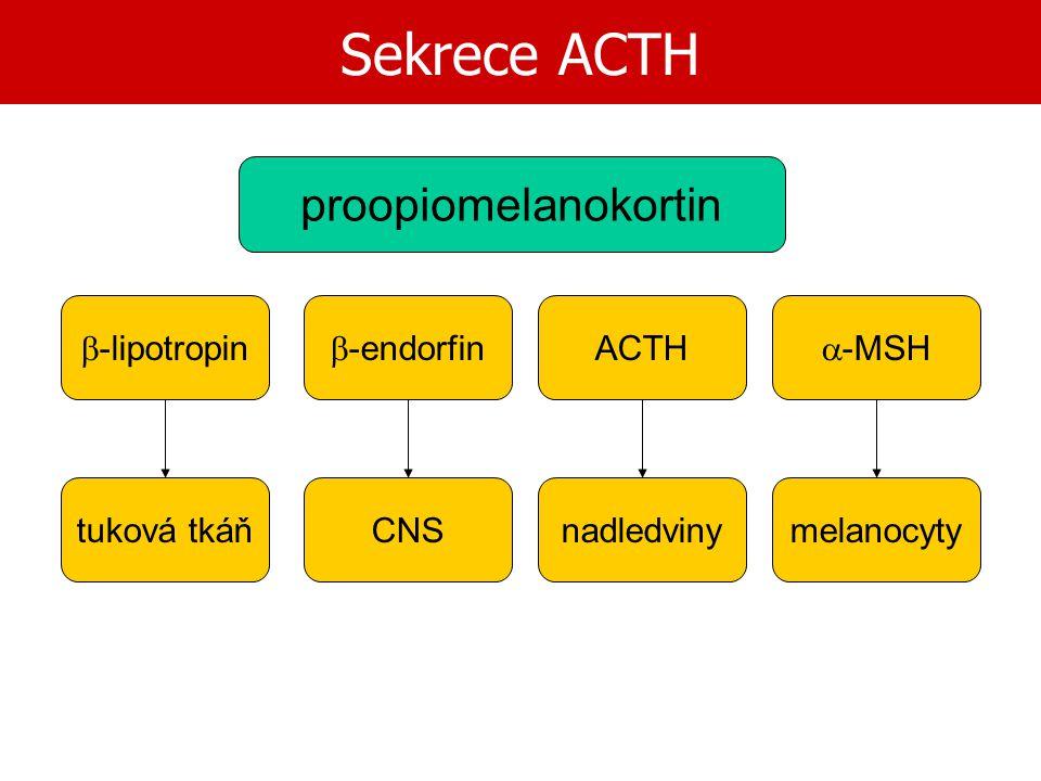 Sekrece ACTH proopiomelanokortin b-lipotropin b-endorfin ACTH a-MSH